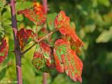 Autumnal colours 3.jpg
