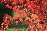 Autumnal colours 6.JPG