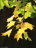 Autumnal colours 7.JPG