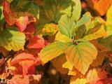 Autumnal colours 8.JPG