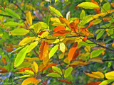 Autumnal colours 9.JPG