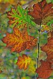 Autumnal colours 12.jpg