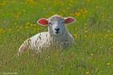 Spring Meadow.jpg