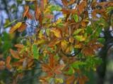 Late Autumn.JPG
