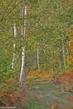 East Blean Woods 2