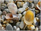 Sunlit shells