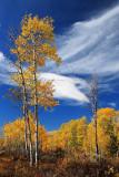 Tetons Aspen - 2004 to 2006