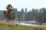 Yellowstone - September 2007