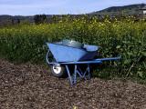 Wheelbarrow in Napa