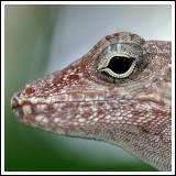 The Sour Lizard