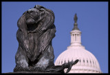 The Lion and Democracy