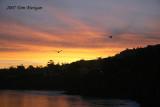 La Jolla Cove at dawn with gulls