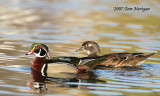 Wood Duck,male and female pair