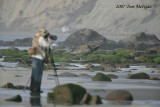 Godwits in focus,Arthur Morris at work and out of focus