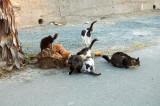 Cats Paradise