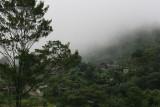 Panoramica del Bosque Nuboso