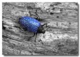 '60s Beetle