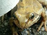 De l'oeuf à la grenouille