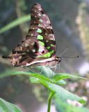 Le jardin des papillons à Hunawihr (Alsace)