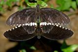 IMG_5116-papillons-900.jpg