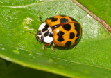 IMG_0074--coccinelle-900.jpg
