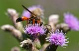 IMG_8758-insecte-900.jpg