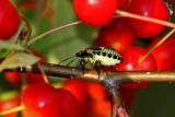 IMG_5300--insecte--900.jpg