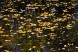IMG_8683-tapis de feuilles-900.jpg
