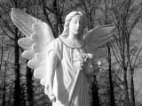 Angel05_bw.jpg