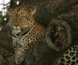 Kenyan Critters