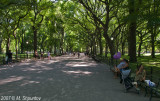 New York, Cental Park #4