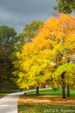 Yellow Tree - Wilmot Creek Park