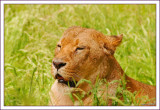 knowsley_safari_park