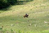 horse&Hounds.jpg