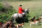 houndsandREDGRay.jpg