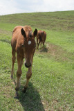 FarmFoal10.jpg
