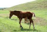 FarmFoal11.jpg