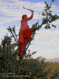 Anju sickling tree009 3.jpg