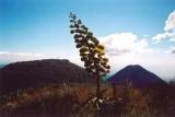 View of Volcan de Izalco
