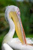 pelicano240107.jpg