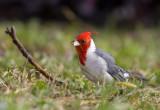 cardenal120507.jpg