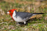 cardenal160607_2.jpg