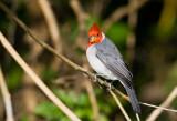 cardenal160607_3.jpg