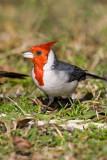 cardenal160607.jpg