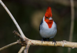 cardenal070707.jpg