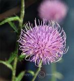 Flower (Oct 06)