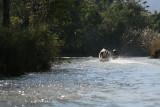 Boat Ride Up The Indein Creek (Dec 06)