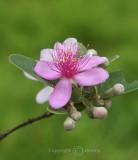 Flower (Feb 07)