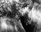 Rays of Light... (20 May 07)