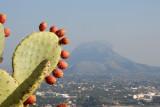 Cacti and Montgo